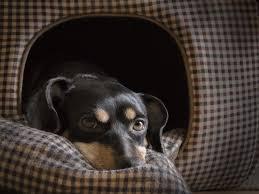 Könnyen pótolható olcsó kutyafekhely