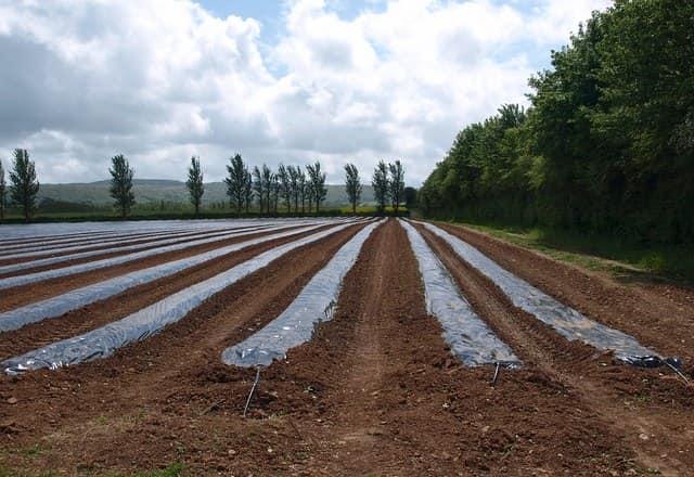 A mezőgazdasági fólia előnyei a növénytermesztésben