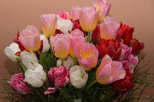 Gyönyörű színű tulipán csokrok